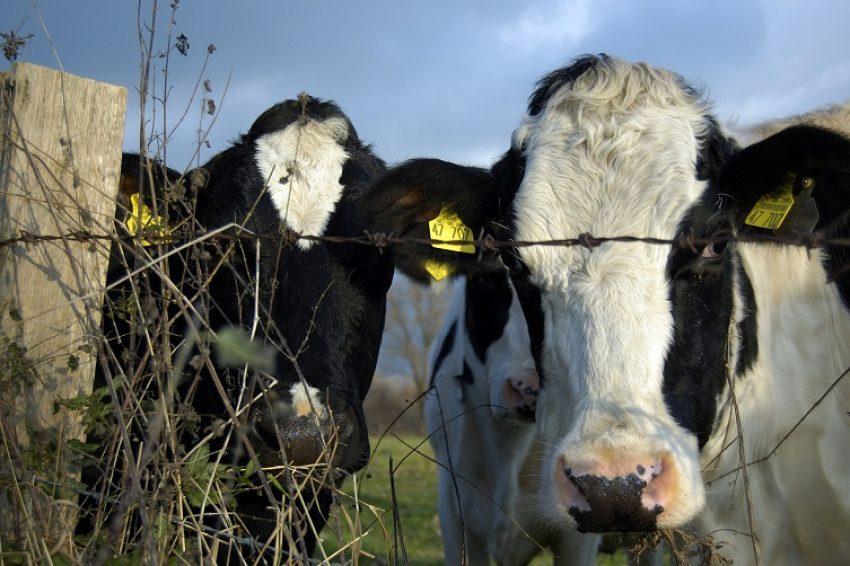Regeling fosfaatreductieplan 2017: voortslepende rechtszaken
