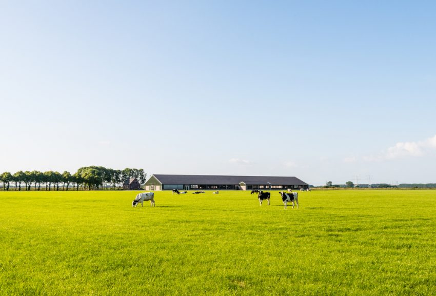 Wetsvoorstel grondgebonden groei melkveehouderij naar de Tweede Kamer