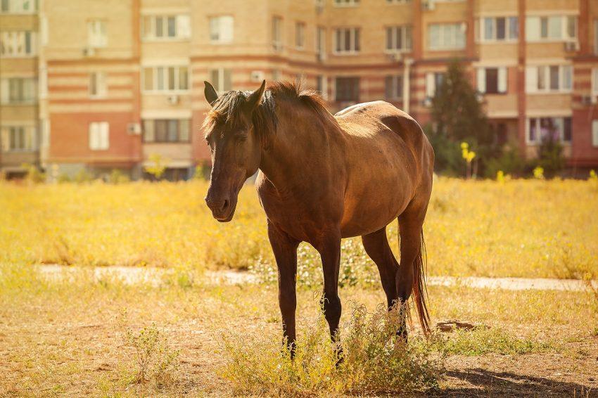 Één pony in strijd met het bestemmingsplan, acht paarden niet