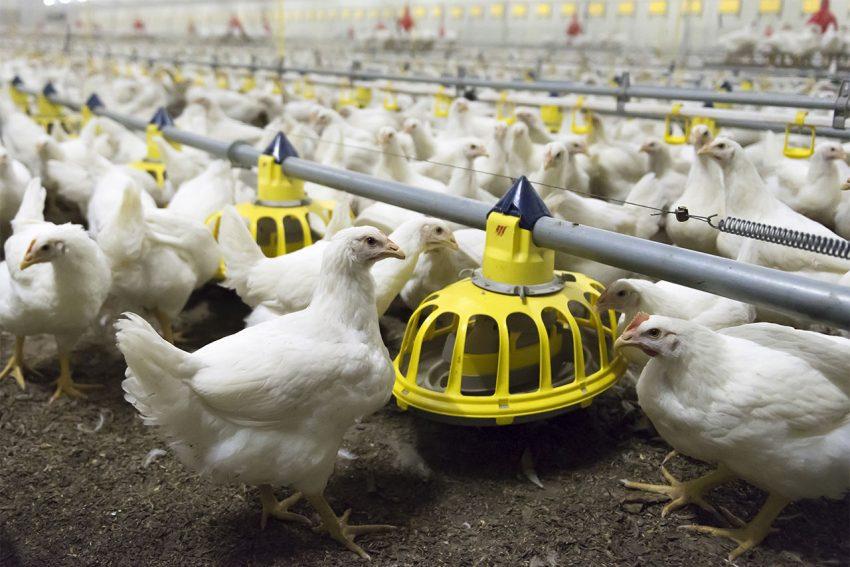Extra controles op dierenwelzijn