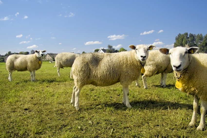 Onderzoeksresultaten veehouderij en gezondheid omwonenden bekend