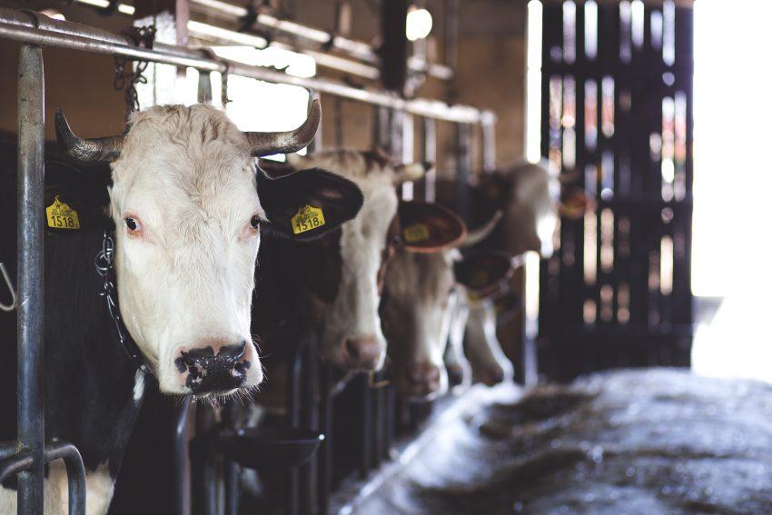 Het wetsvoorstel fosfaatrechten melkvee: Tweede Kamer aan zet (het wetsvoorstel in 6 delen, deel 1)