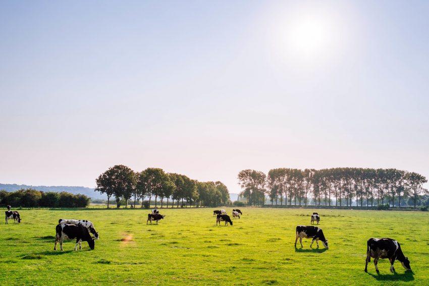 Wetsvoorstel fosfaatrechten melkvee: generieke afroming (het wetsvoorstel in 6 delen, deel 2)