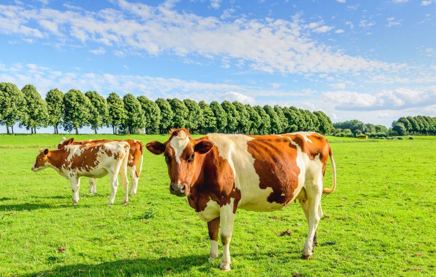 Wetsvoorstel fosfaatrechten melkvee: de voorziening voor knelgevallen (het wetsvoorstel in 6 delen, deel 3)