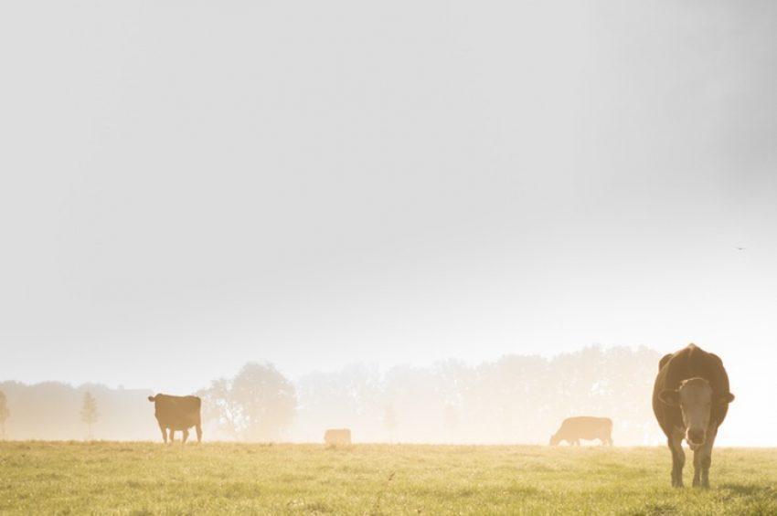 Het wetsvoorstel fosfaatrechten melkvee: handhaving en rechtsbescherming (het wetsvoorstel in 6 delen: deel 6)