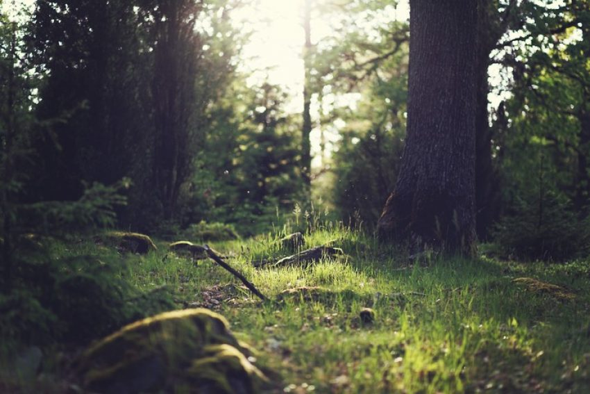 Bestemmingsplanregels en Natura 2000