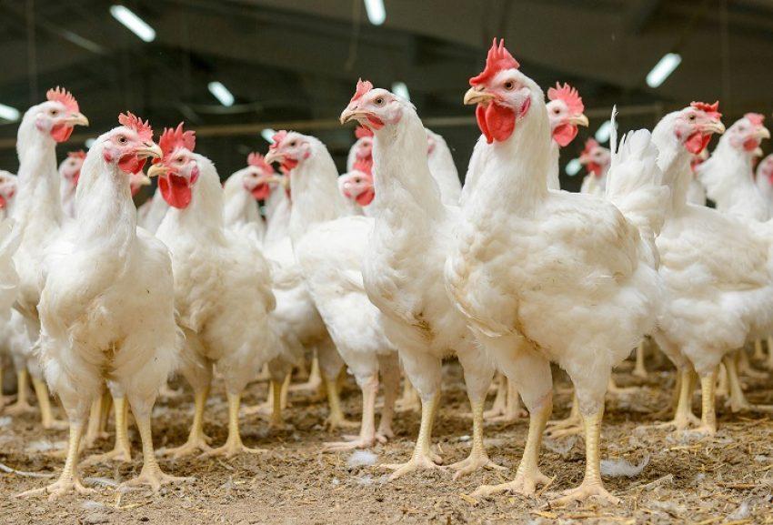 Beoordeling van het woon- en leefklimaat: GGD-onderzoek of Handreiking bij de Wet geurhinder en veehouderij?