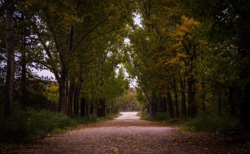 Gemeentelijk kapverbod voor bomen in het buitengebied? Het vervolg