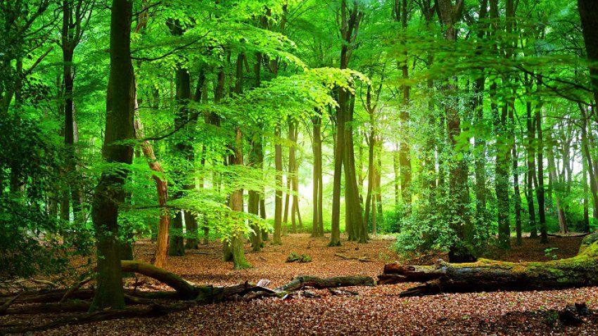 Boswet gaat op in de Wet natuurbescherming, wat verandert er?