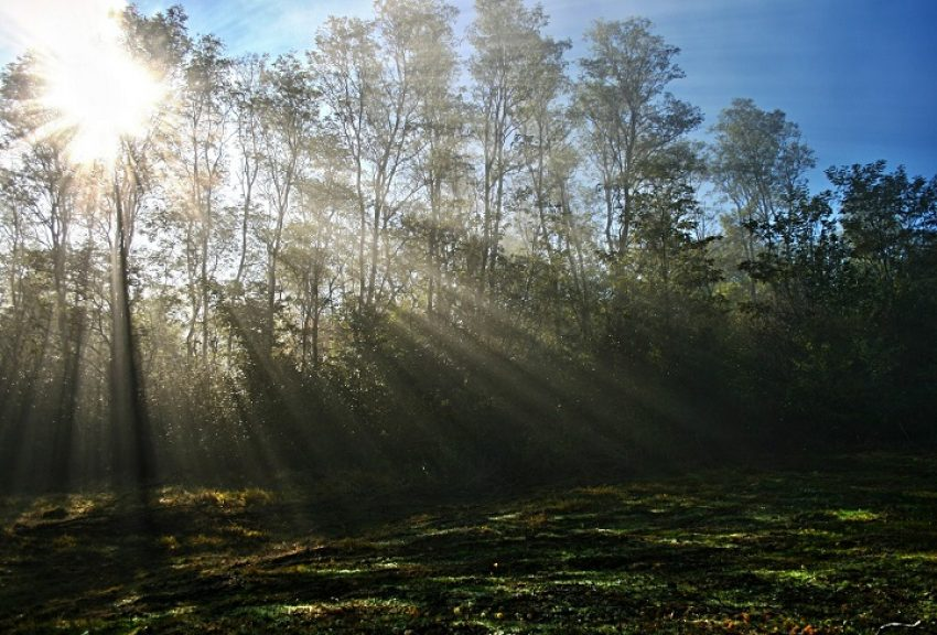 Natura 2000 en bestemmingsplan: gewijzigde referentiesituatie?