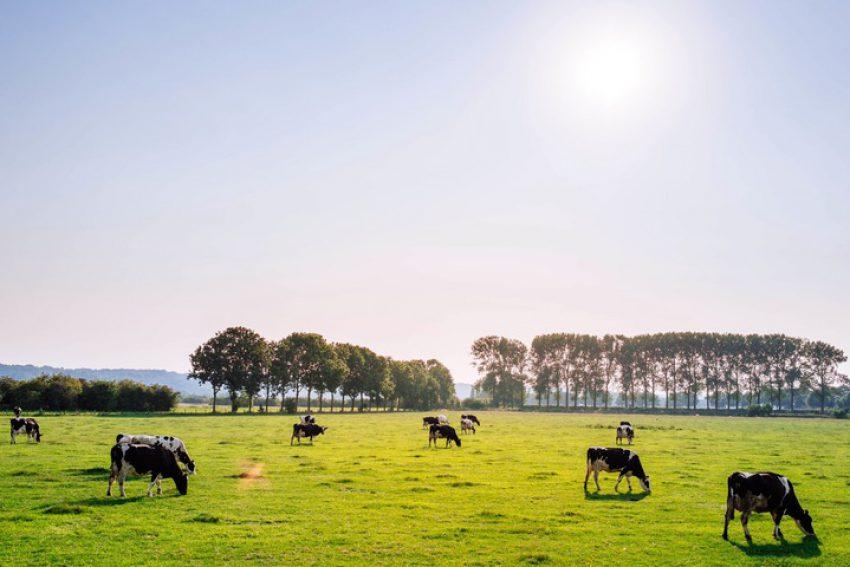 Stoppersregeling -  fosfaatrechten - aanspraken verpachter?