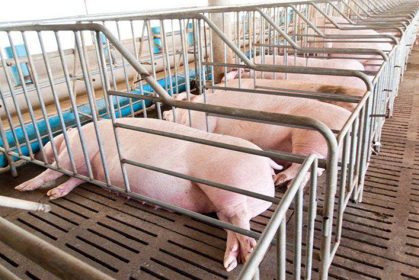 Nieuw toetsingskader voor geurhinder van veehouderijen (deel I)