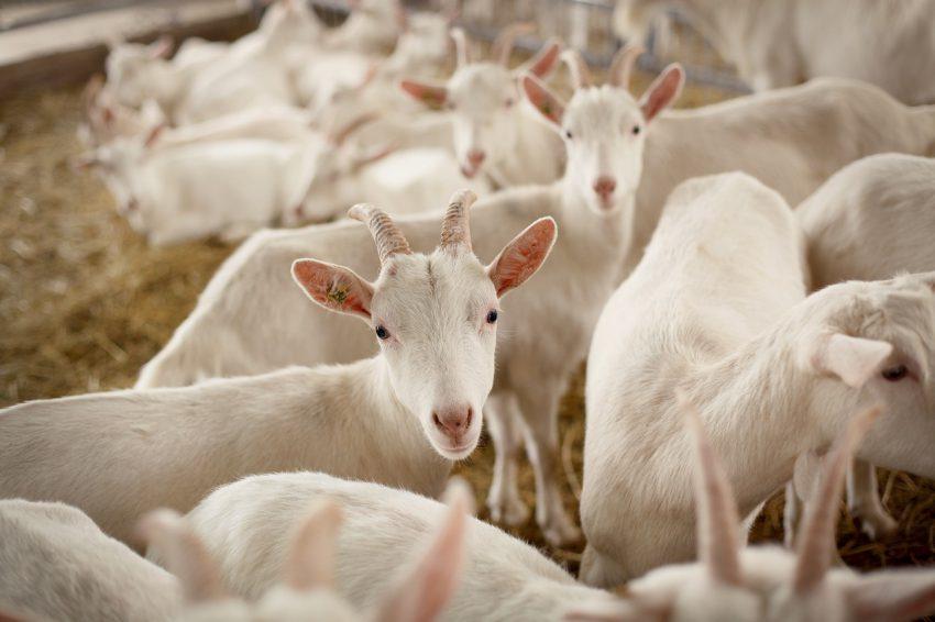 Veehouderij en Gezondheid Omwonenden; nieuwe inzichten