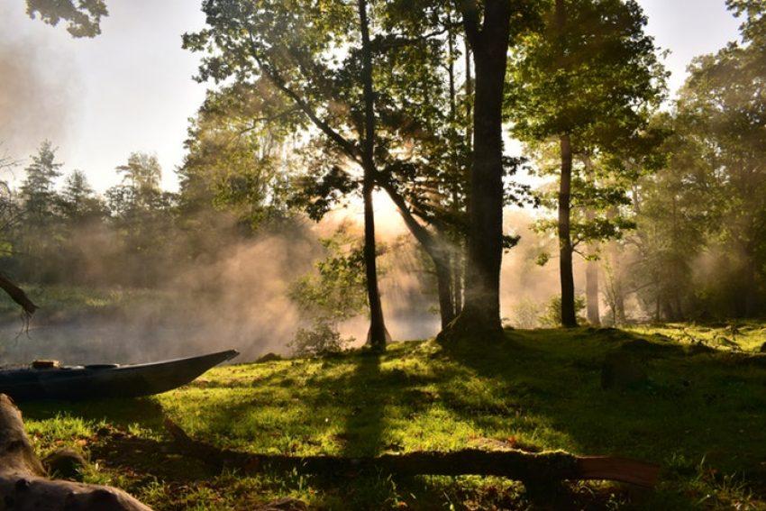 Blogserie Wet natuurbescherming en Wet ruimtelijke ordening: deel 4 doorwerking PAS naar het bestemmingsplan