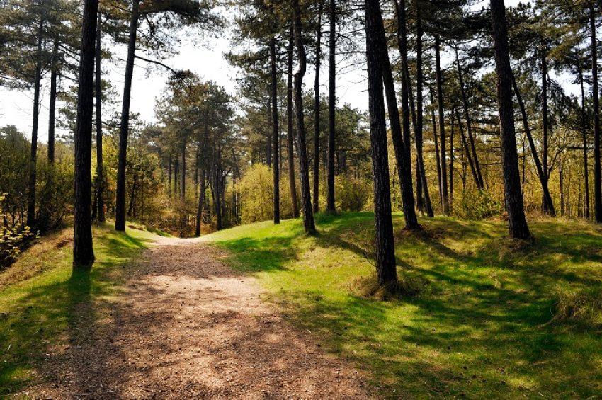 Schorsing natuurvergunningen vanwege PAS