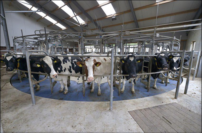 Melkveehouderij