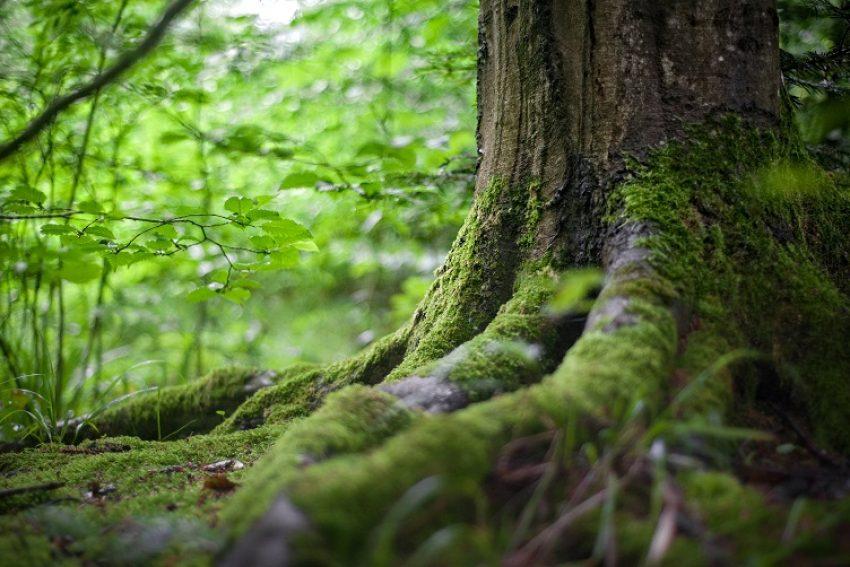 Natura 2000 en referentiesituatie bestemmingsplan
