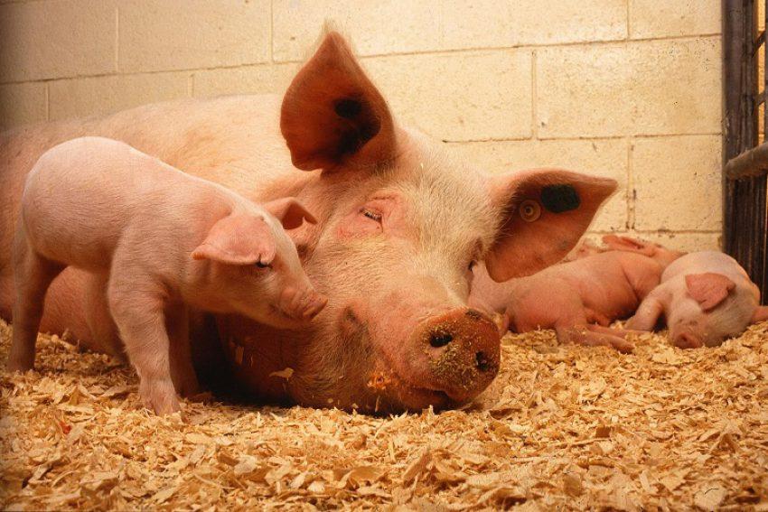 Afwijzingsgronden - concept Subsidieregeling sanering varkenshouderijen (Srv)