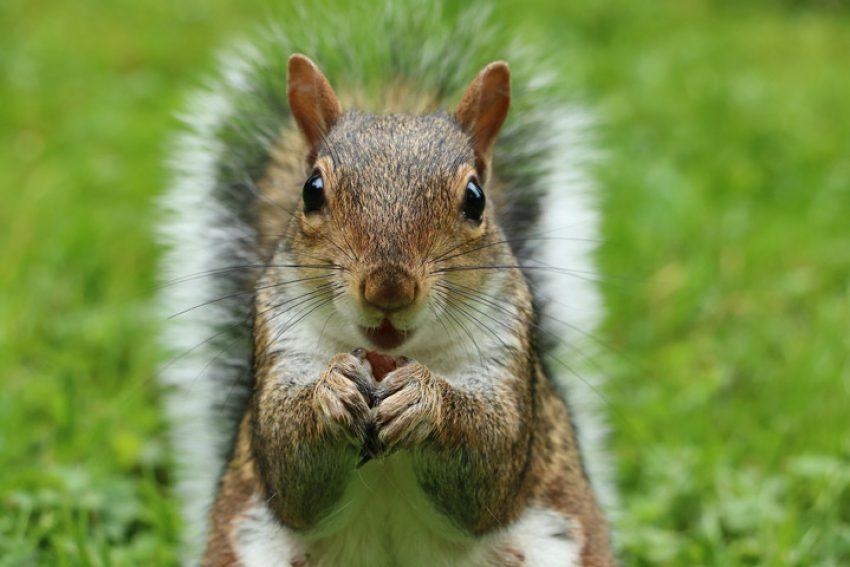Overlast bij verhuur van woonruimte: het houden van 126 dwergeekhoorns leidt tot laatste kans