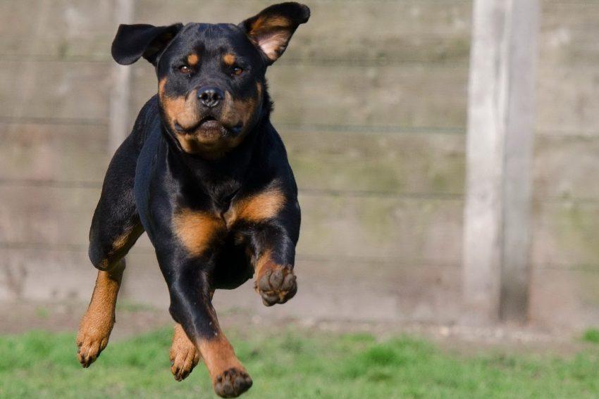 Inbeslagname hond na bijtincident. Onvrijwillig afstand doen van hond ter voorkoming van herhaling van de overtreding. (AB 2020/203)