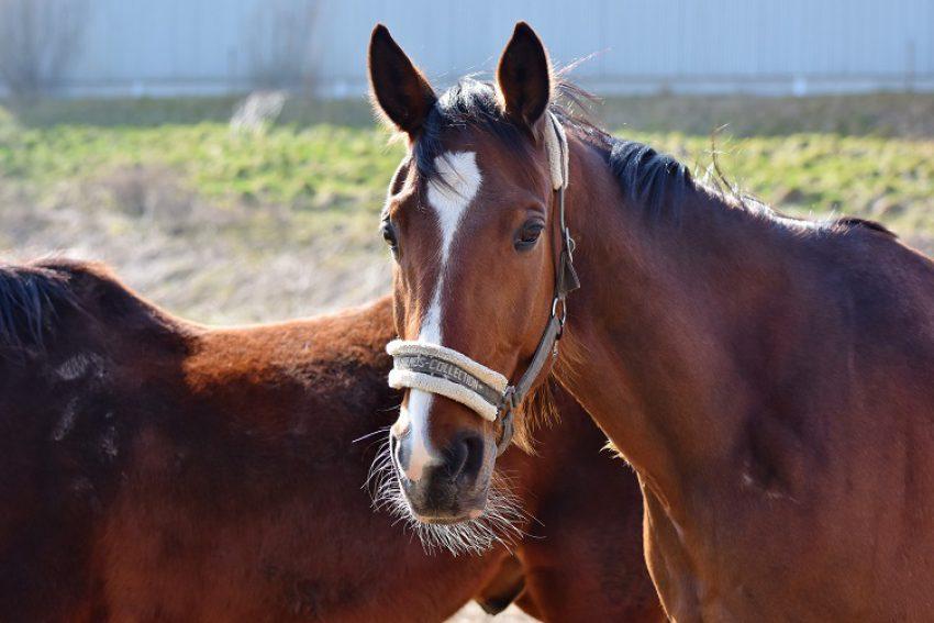 Een paard kopen voor de Olympische Spelen: consumentenkoop of niet?