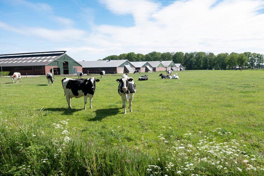 Extern salderen in het planspoor met agrarische bedrijven