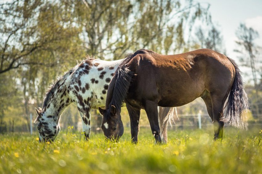 Verlenging bewijsvermoeden non-conformiteit bij handel in levende dieren