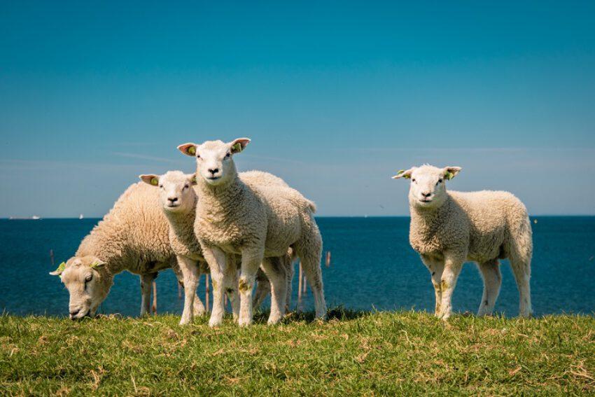 Internationale handelskoop van dieren en het Weens koopverdrag