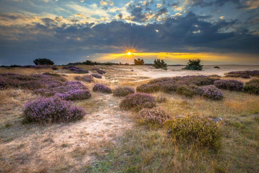 (SLB-Overijssel): Natura 2000-gebieden. Stikstof. (TvAR 2021/8044)